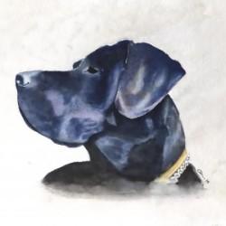 Cesar, perro labrador.