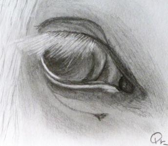 El ojo de él.
